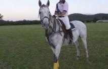 Queenland Ponies
